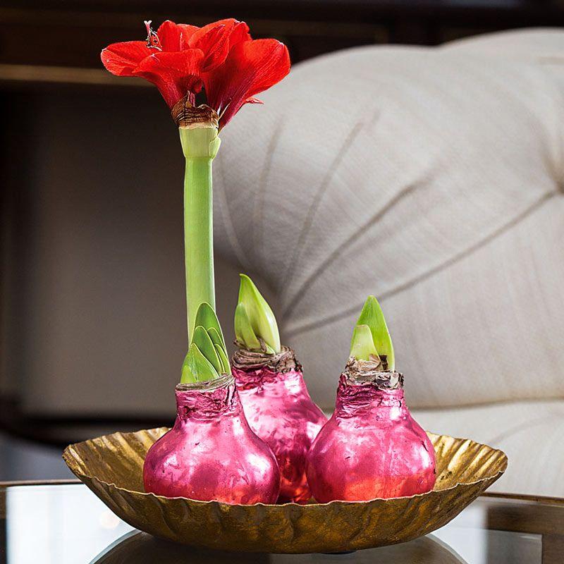 Луковица Амариллиса Happy bulb розоваяПодарки<br>Луковица Амариллиса здорово подойдет для подарка.<br>Размер: 32 см; Объем: None; Материал: None; Цвет: Розовый;