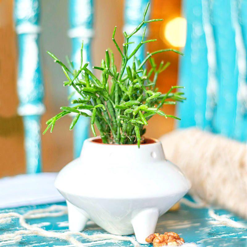 Набор для выращивания Eco НЛОДача<br>Набор для выращивания Eco нло<br>Размер: 8,5 х 11 см.; Объем: None; Материал: Керамика, земля, семена; Цвет: Белый;