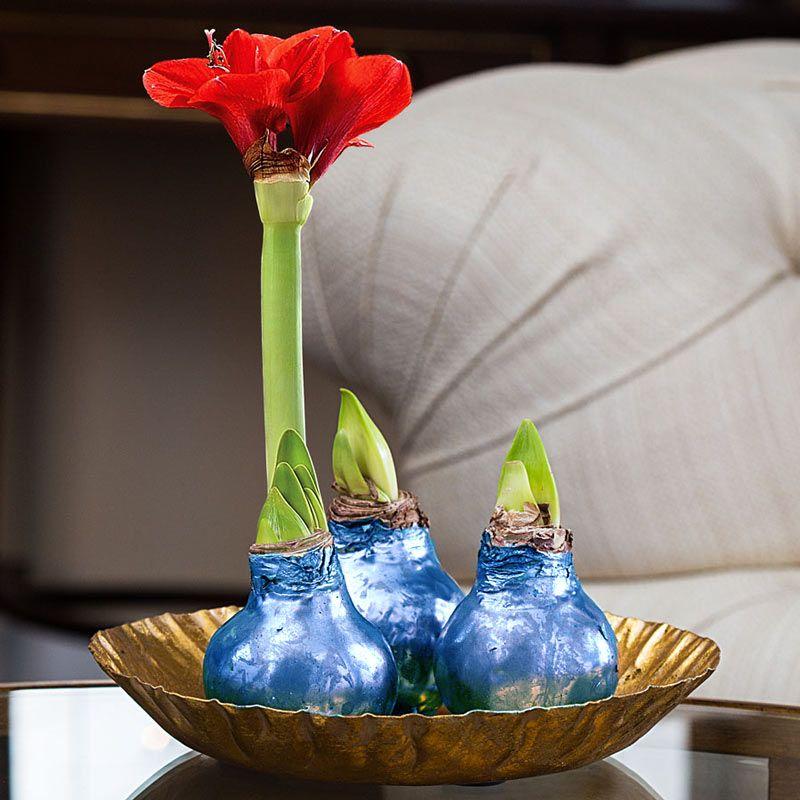 Луковица Амариллиса Happy bulb синяяЛюбимой<br>Луковица синего цвета с настоящими цветами.<br>Размер: 32 см; Объем: None; Материал: None; Цвет: Синий;