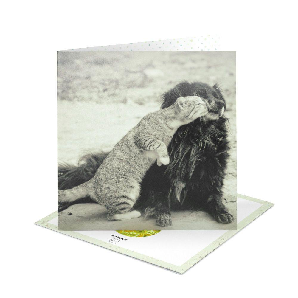 Открытка Scrincard ЛюбовьПодарки<br>Поцелуй для двух из семейства кошачьих.<br>Размер: 20 х 20 см; Объем: None; Материал: Картон; Цвет: None;